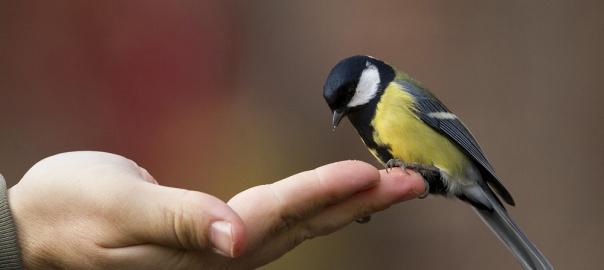 Give a bird a hand